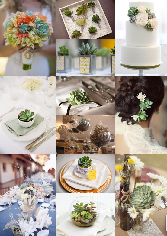 Wedding Flowers and Decorations Using Succulents Mood Board